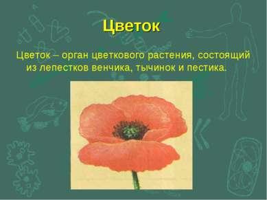 Цветок Цветок – орган цветкового растения, состоящий из лепестков венчика, ты...