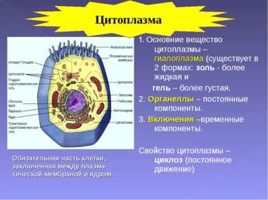 1. Основние вещество цитоплазмы – гиалоплазма (существует в 2 формах: золь - ...
