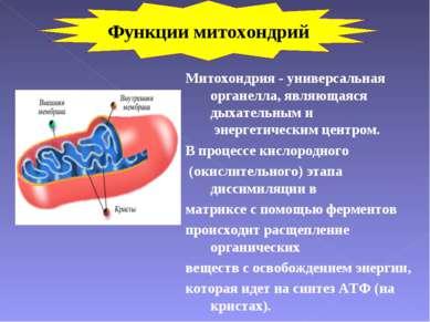 Митохондрия - универсальная органелла, являющаяся дыхательным и энергетически...