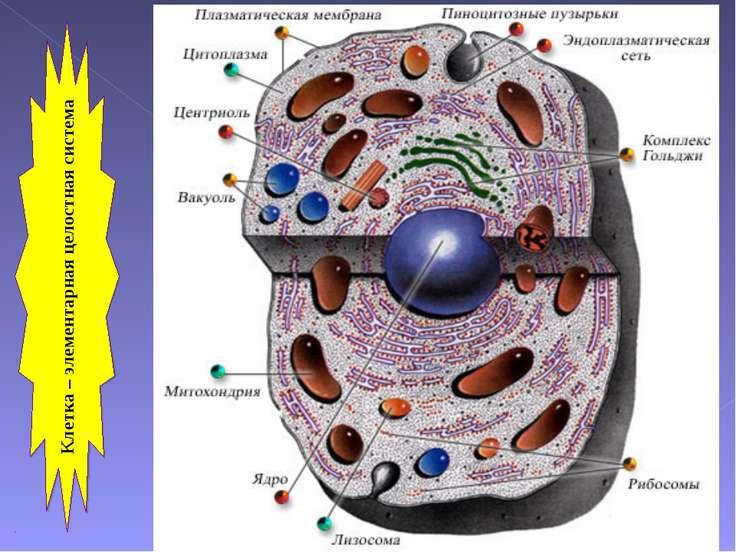 Клетка – элементарная целостная система