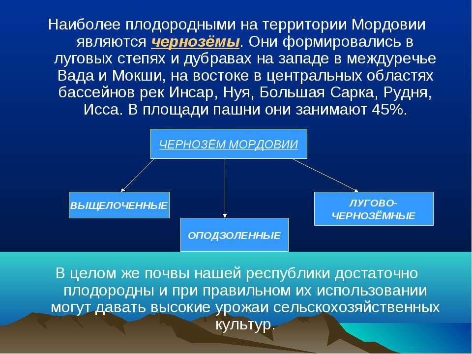 Наиболее плодородными на территории Мордовии являются чернозёмы. Они формиров...