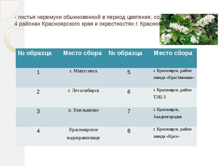 - листья черемухи обыкновенной в период цветения, собранные в 4 районах Красн...