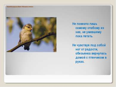 Басня Леонардо да Винчи «Обезьянка и птенец» Не повезло лишь самому слабому и...