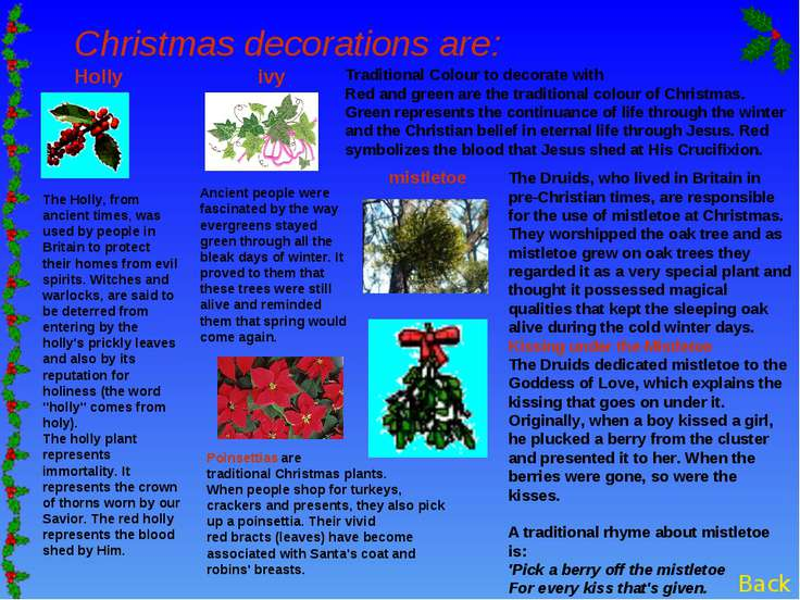 Christmas decorations are: Holly ivy Poinsettias are traditional Christmas pl...