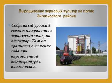 Выращивание зерновых культур на полях Энгельсского района Собранный урожай св...