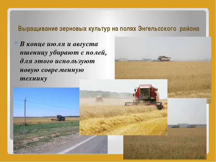 Выращивание зерновых культур на полях Энгельсского района В конце июля и авгу...
