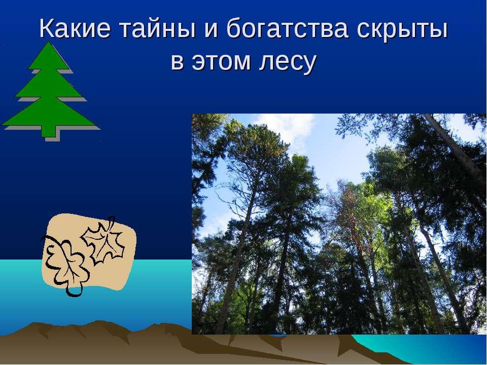 Какие тайны и богатства скрыты в этом лесу