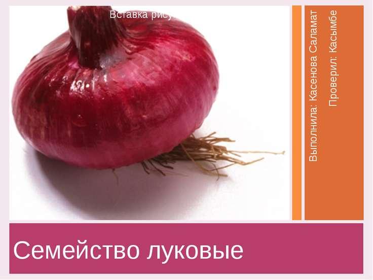 Семейство луковые Выполнила: Касенова Саламат Проверил: Касымбе Заголовок фот...