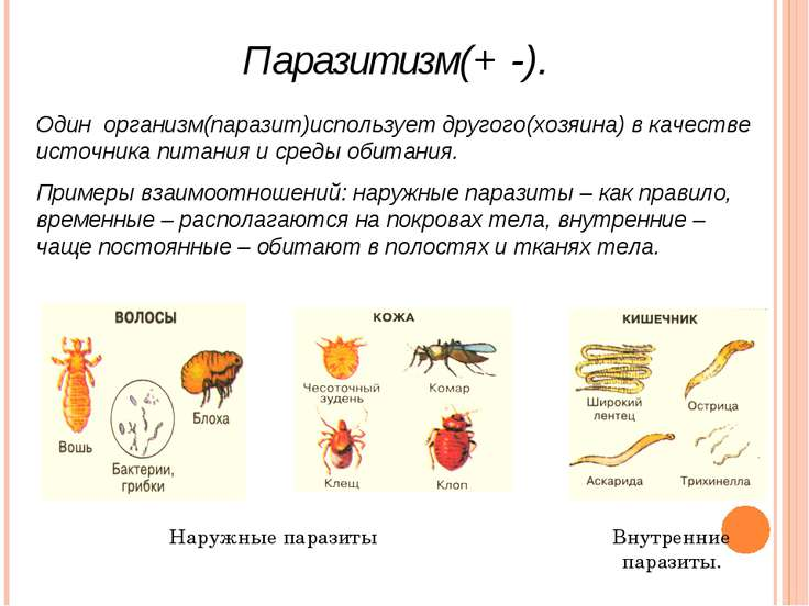 Паразитизм(+ -). Один организм(паразит)использует другого(хозяина) в качестве...