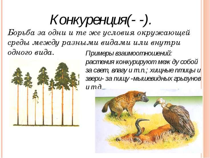 Конкуренция(- -). Примеры взаимоотношений: растения конкурируют между собой з...