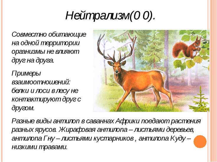 Нейтрализм(0 0). Совместно обитающие на одной территории организмы не влияют ...