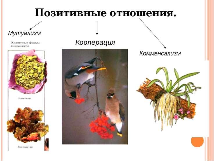 Кооперация Мутуализм Комменсализм Позитивные отношения.