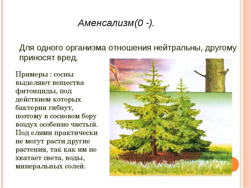 Аменсализм(0 -). Для одного организма отношения нейтральны, другому приносят ...