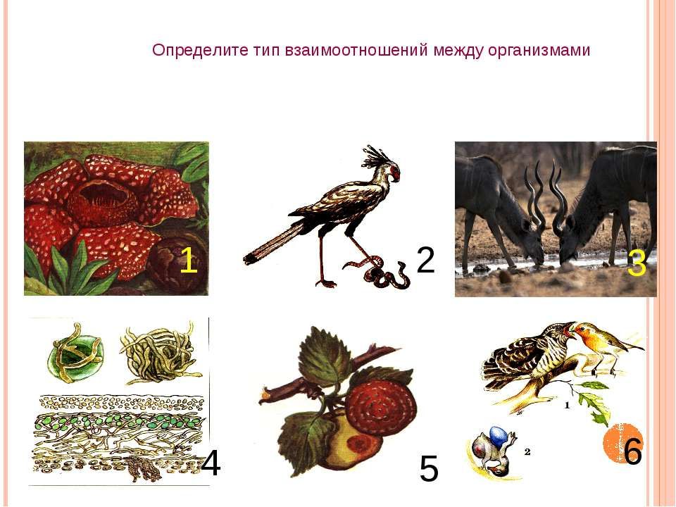 Определите тип взаимоотношений между организмами