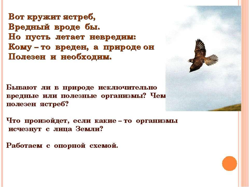 Вот кружит ястреб, Вредный вроде бы. Но пусть летает невредим: Кому – то вред...