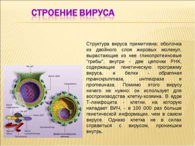 Структура вируса примитивна: оболочка из двойного слоя жировых молекул, вырас...