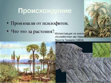 Происхождение Произошли от псилофитов. Что это за растения? Иллюстрация из кн...