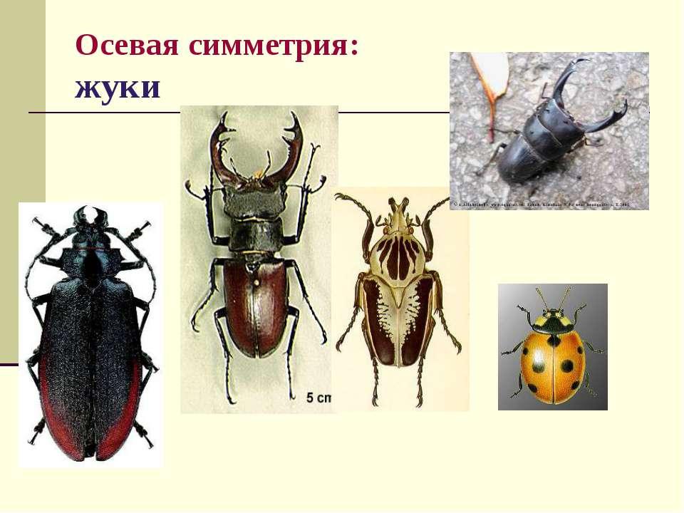 Осевая симметрия: жуки