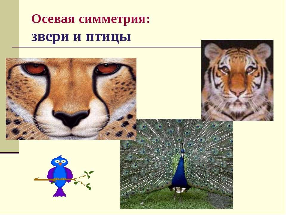 Осевая симметрия: звери и птицы