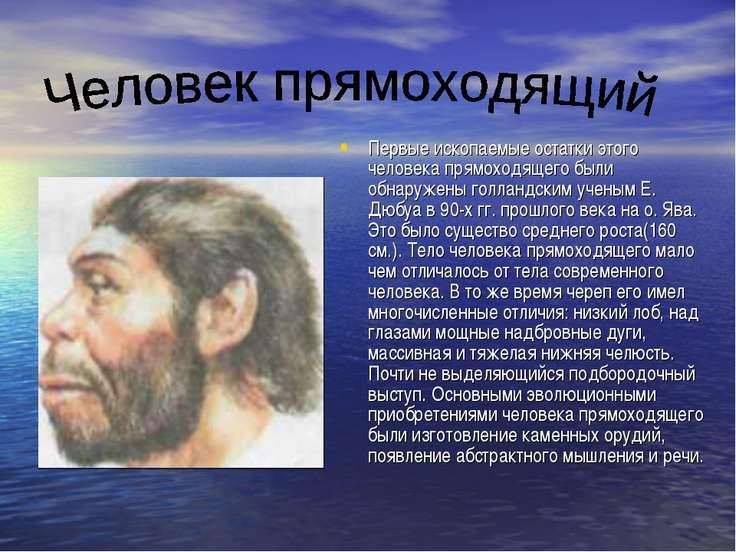 Первые ископаемые остатки этого человека прямоходящего были обнаружены голлан...