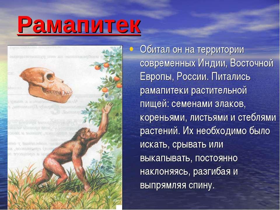 Рамапитек Обитал он на территории современных Индии, Восточной Европы, России...