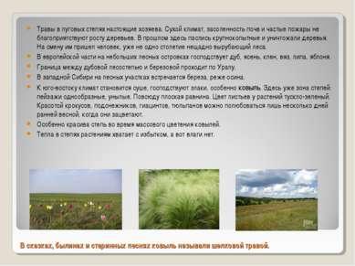 В сказках, былинах и старинных песнях ковыль называли шелковой травой. Травы ...