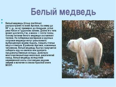 Белый медведь Белый медведь (Ursus maritimus) распространен по всей Арктике, ...
