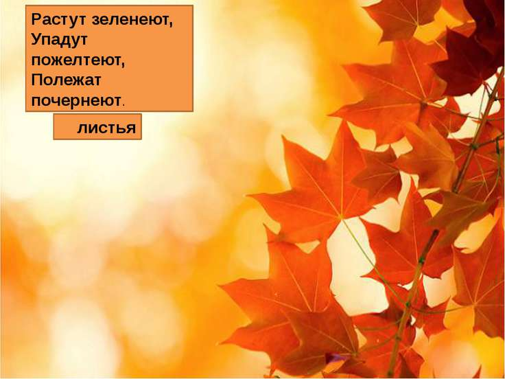 Растут зеленеют, Упадут пожелтеют, Полежат почернеют. листья