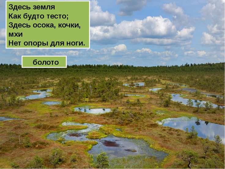 Здесь земля Как будто тесто; Здесь осока, кочки, мхи Нет опоры для ноги. болото