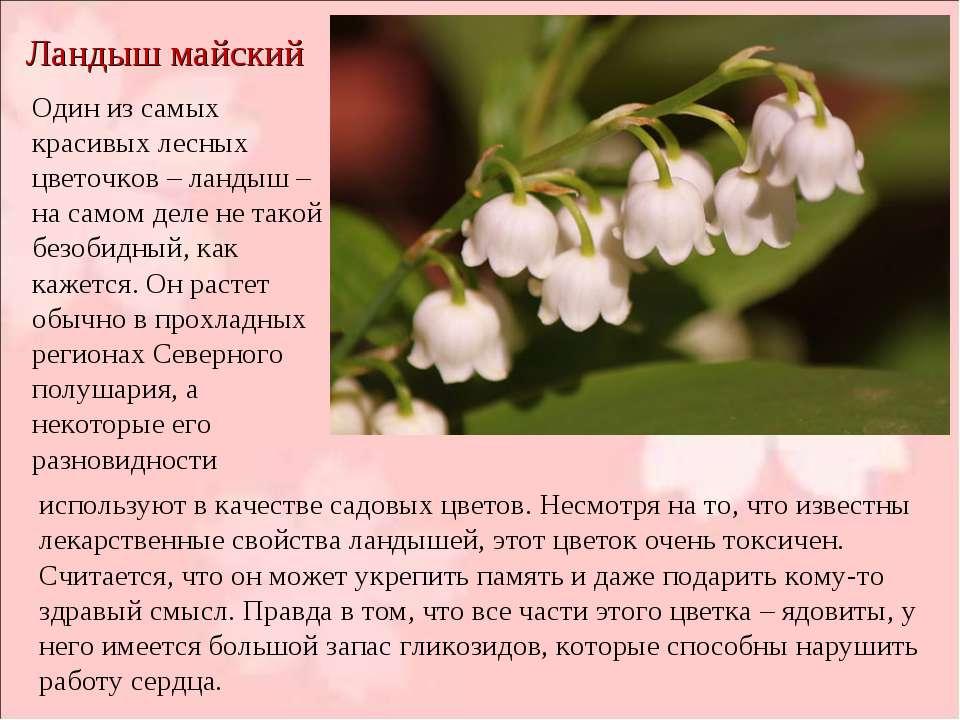 Ландыш майский Один из самых красивых лесных цветочков – ландыш – на самом де...