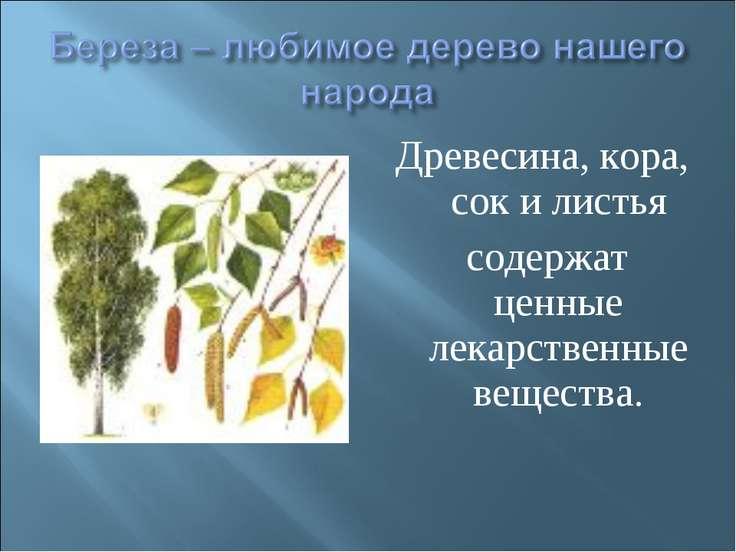 Древесина, кора, сок и листья содержат ценные лекарственные вещества.