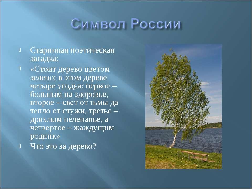 Старинная поэтическая загадка: «Стоит дерево цветом зелено; в этом дереве чет...