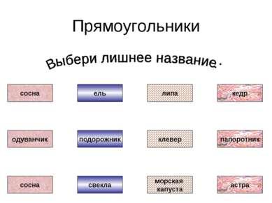 Прямоугольники