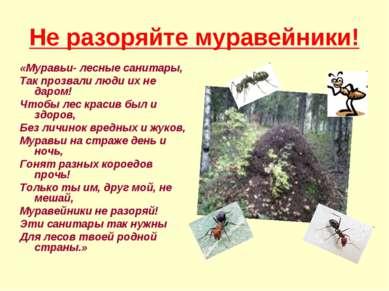 Не разоряйте муравейники! «Муравьи- лесные санитары, Так прозвали люди их не ...