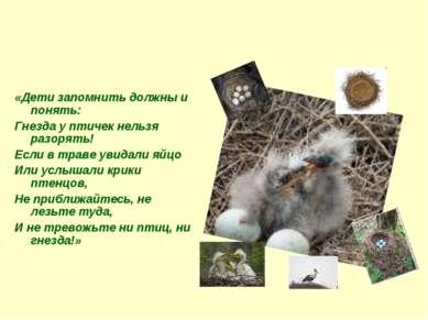 Не разоряйте птичьи гнезда! «Дети запомнить должны и понять: Гнезда у птичек ...