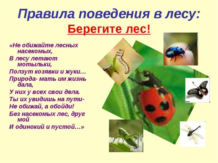 Правила поведения в лесу: Берегите лес! «Не обижайте лесных насекомых, В лесу...