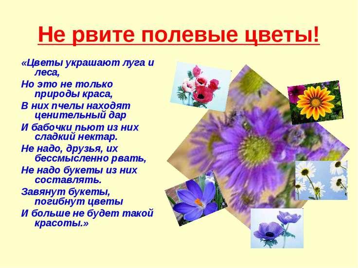 Не рвите полевые цветы! «Цветы украшают луга и леса, Но это не только природы...