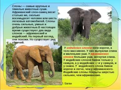 Слоны — самые крупные и тяжелые животные суши. Африканский слон-самец весит с...