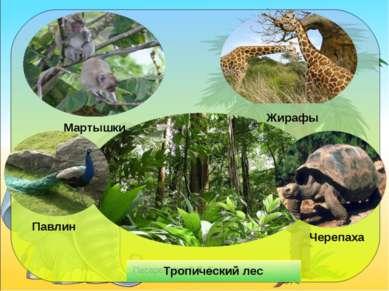 Мартышки Жирафы Тропический лес Павлин Черепаха Писаревская Т.П. Баган