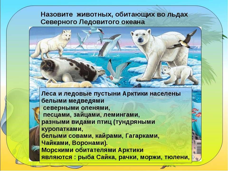 Назовите животных, обитающих во льдах Северного Ледовитого океана. Леса и лед...