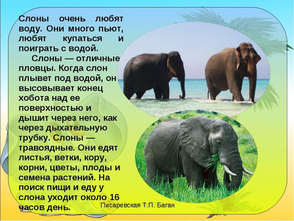 Слоны очень любят воду. Они много пьют, любят купаться и поиграть с водой. Сл...