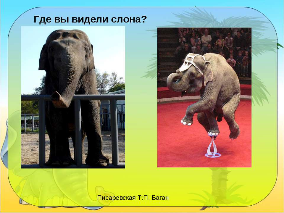 Где вы видели слона? Писаревская Т.П. Баган