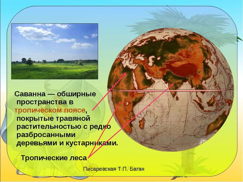Саванна — обширные пространства в тропическом поясе, покрытые травяной растит...