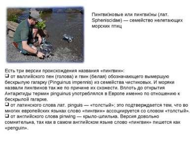 Пингви новые или пингви ны (лат. Spheniscidae) — семейство нелетающих морских...