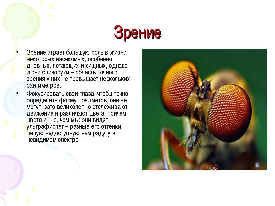 Зрение Зрение играет большую роль в жизни некоторых насекомых, особенно дневн...
