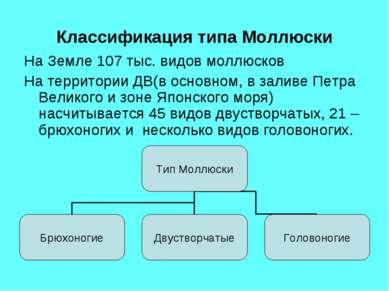 Классификация типа Моллюски На Земле 107 тыс. видов моллюсков На территории Д...