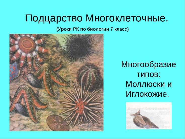 Подцарство Многоклеточные. Многообразие типов: Моллюски и Иглокожие. (Уроки Р...