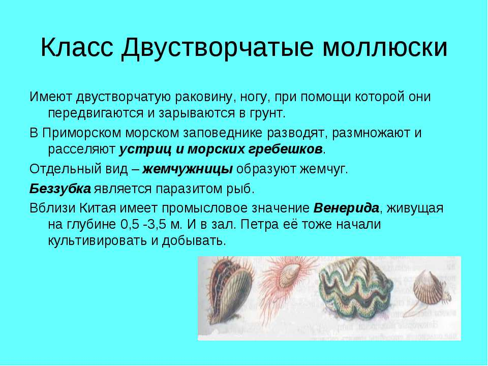 Класс Двустворчатые моллюски Имеют двустворчатую раковину, ногу, при помощи к...