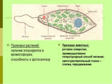 Признаки растений: наличие хлорофилла в хроматофорах; способность к фотосинте...