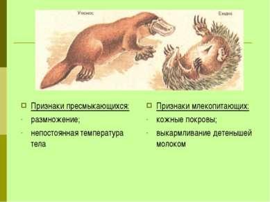 Признаки пресмыкающихся: размножение; непостоянная температура тела Признаки ...